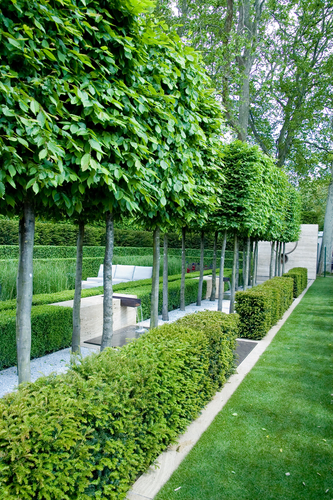 Pleached trees leading to water feature