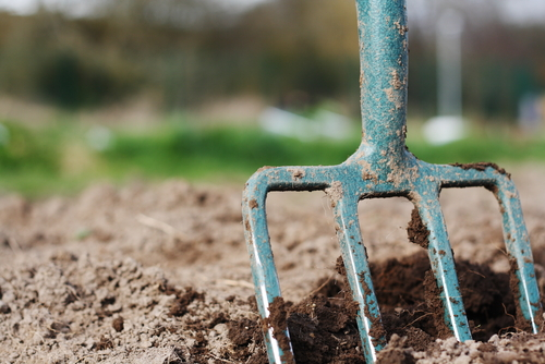 forking soil