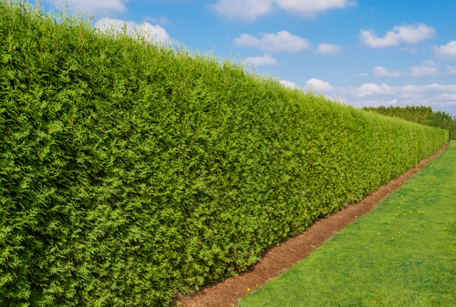 formal hedge